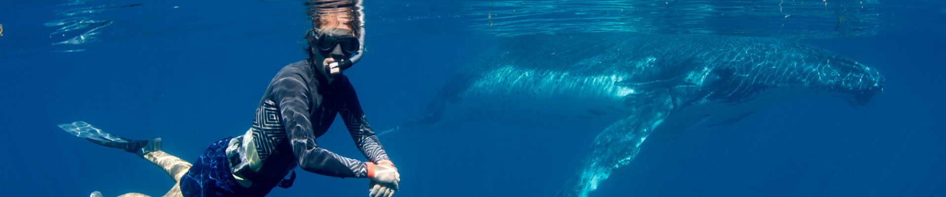 Humpback Whale Coral Bay Eco Tours - Banner